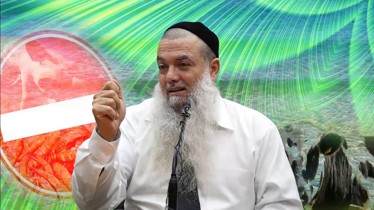 הרב יגאל כהן - קצרים | אוהבים שרימפסים? בואו תשמעו מה הם היו לפני שנכנסו לכם לבטן.