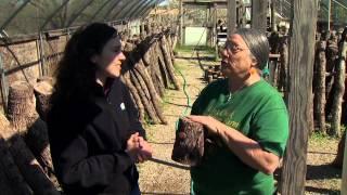 Lost Creek Mushroom Farm