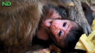 baby monkey cute