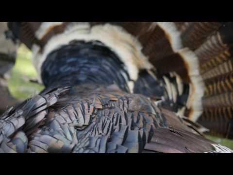 Utah Limited Entry Turkey Hunt