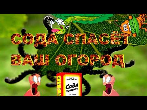 Сад, огород  Первые весенние работы!