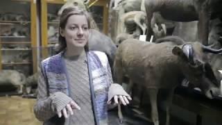 Дитячий телевізійний театр 'Юрашки', репортаж 'Зоологічний музей'  журналіст Арсен Маковецький