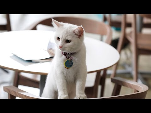 New York Opens Its First Cat Cafe - Should There Be More?