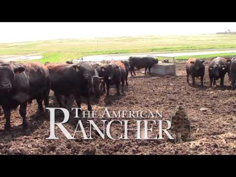 American Rancher - American Simmental Association