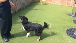 Dogs Trust Manchester - Lassie