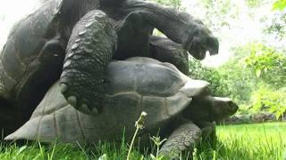 Funny Turtles. Веселые черепахи.