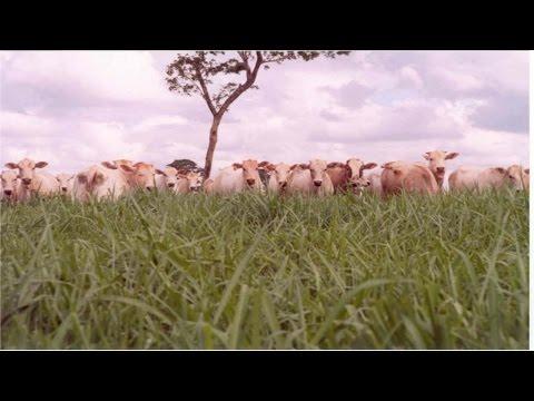 Curso Adubação de Pastagens - Exigências Nutricionais de Plantas Forrageiras