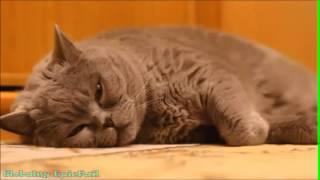 Смешные котята и котейки. Лучший юмор с домашними любимцами 2014
