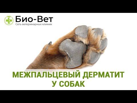 Межпальцевый дерматит у собак. Ветеринарная клиника Био-Вет.