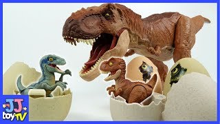 Indoraptor Vs Tyrannosaurus Rex Battle. T-Rex Raptor Blue Dinosaurs Toys For Kids [Jjtoy Tv]