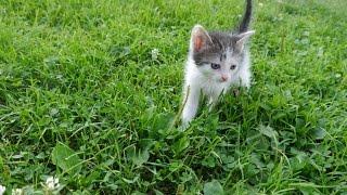 "СП ""Мои любимые коты"". Кот на одеяле (Т. Кузнецова)."