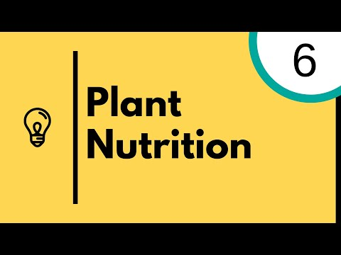 Plant Nutrition and photosynthesis - IGCSE Biology