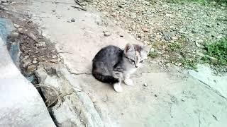Наши котята - Буся, Барс и Дымка