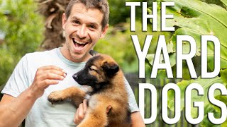The Yard Dogs//The Dogs Of Goat Daddys(Pt.1/3)
