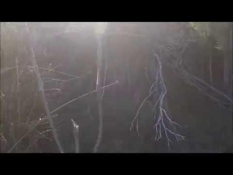 In Search Of Hog Deer Vic Australia
