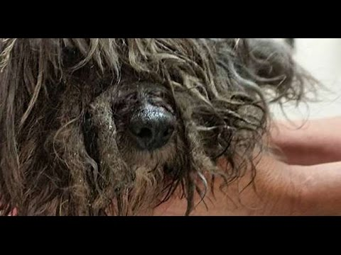 Marley: Found with a cord around his neck, matted hair and toothbush attached to his rear