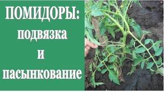 ПОМИДОРЫ: подвязка и пасынкование(В этом видео я расскажу как провожу подвязку и пасынкование томатов на своем садовом участке . Подвязка..., 2015-04-17T19:26:05.000Z)