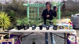 Growing Your Own Tomatoes - Cedros Gardens, Solana Beach, CA