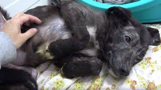 Dog Sat Shaking In Fear And Hated To Be Touched—Until She Discovered Belly Rubs