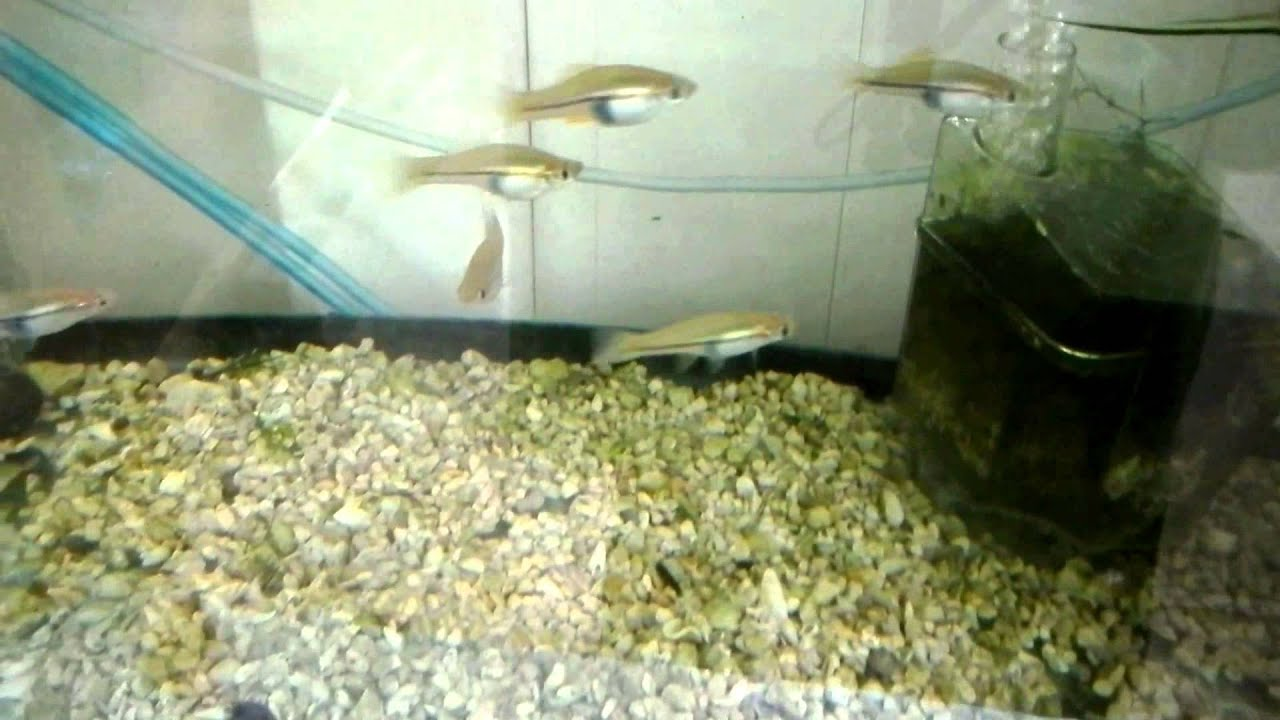 Outdoor backyard fish tanks update youtube for Outside fish tank