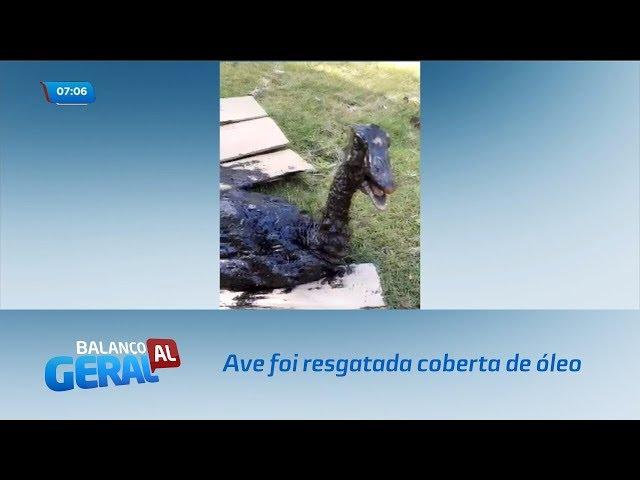 Uma ave morreu e outra foi resgatada após ter contato com petróleo das praias