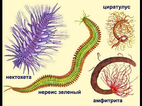 Видео Биология 7 класс учебник