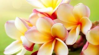 6 Hour Spa Massage Music: Meditation Music, Healing Music, Relaxing Music, Soothing Music ☯2422