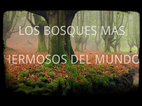 Los bosques más hermosos del mundo