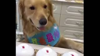 Truco de magia terminó en reacción épica de un perro