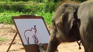 Can an Elephant draw by itself??? Amazing drawing by an intelligent Elephant!!!