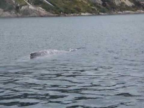 Moby Dick | Doovi