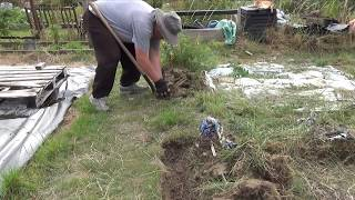 Gardening channel: 1. Clearing the Plot & First Dig | Diary of an Allotment Gardener