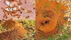 Ameri-Tech Pest Control Krum TX 76249 Rodent Control