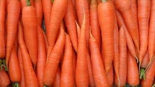 Секрет вкусной моркови(А вы знали что морковку нужно растить ровно 100 дней? Как вырастить морковку вкусной и без проблем., 2015-05-16T06:01:03.000Z)