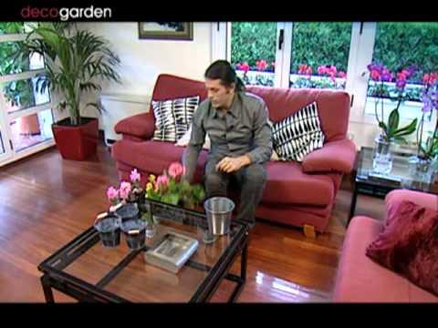 Plantas peque as para centros de mesa youtube for Centros de mesa para salon