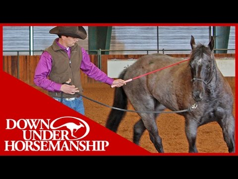 Clinton Anderson: Intermediate Testing, Groundwork Part 1 - Downunder Horsemanship