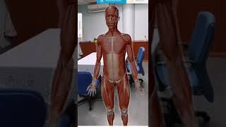 Quick review: Visible body Human anatomy atlas