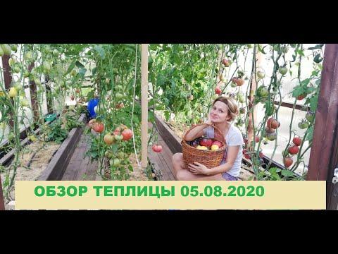 ОБЗОР ТЕПЛИЦЫ  05 08 2020. /ТОМАТЫ В ТЕПЛИЦЕ