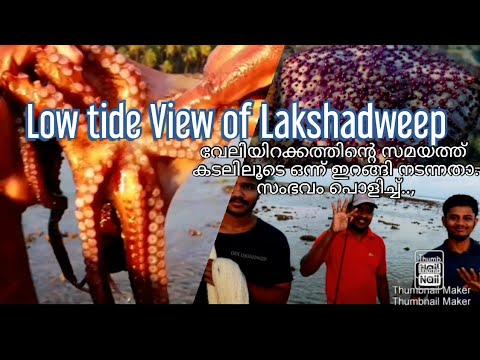 Experiencing The Low Tide Of Lakshadweep| Beautiful Corals|Hunting Octopus | Sea Urchin| Starfish 🌟