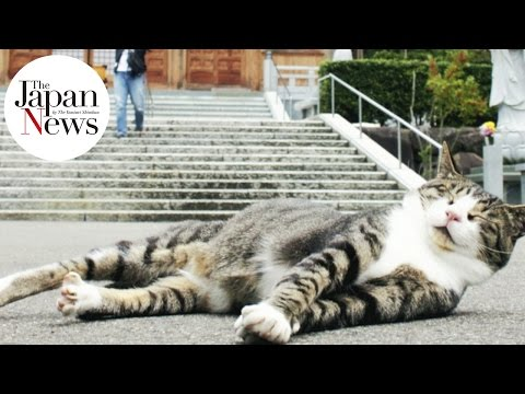 Cats versus Dogs in The Japan News