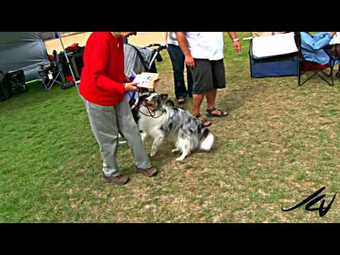 A conformation dog show - Kelowna