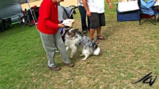 A Conformation Dog Show - Kelowna