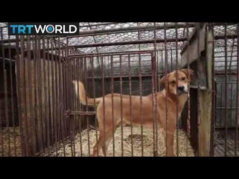 Korea Dog Rescue: Dogs kept for meat rescued in S.Korea