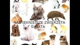 Najpiękniejsze zwierzęta świata TOP 5