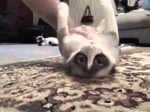 Funny Cats Doing Stupid Stuff