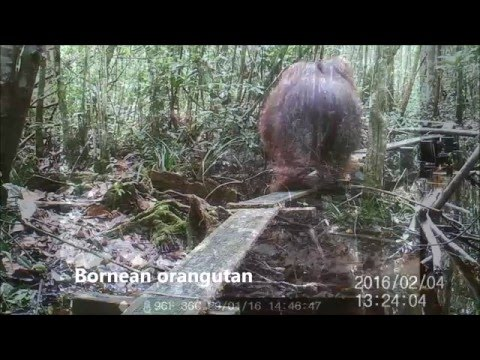 Best of OuTrop Camera Trap Footage - February 2016