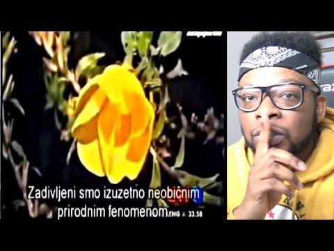CNN Flower Miracle of Allah Bloom When hear the Azan (adhan flower)