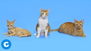 How To Switch Your Cat from Wet To Dry Food | Chewy