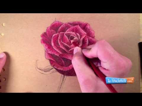 How to Draw a Rose with Colored Pencils