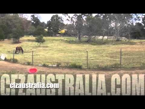 Big cats in hawkesbury nsw Australia